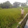 Pembangunan Desa Pelas Sudah Bisa Dirasakan Masyarakat & Pertanian Maksimal