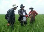 Aceh Rizal Fahmi: Sosialisasikan Pencegahan Serangan Hama Wereng Coklat